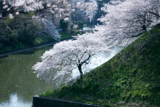 sakura_chidori_058